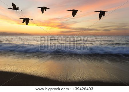 Birds silhouettes is five beautiful birds flying as one at sunset as an ocean wave rolls to shore