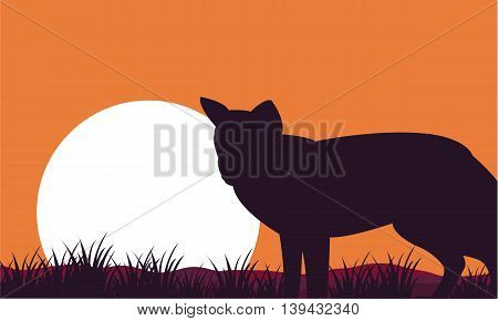 Fox at afternoon scenery silhouettes on orange backgrounds