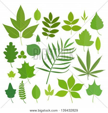 Set of leaves icons isolated on white background. Vector stock illustration.