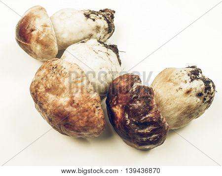 Porcini Mushroom Vintage Desaturated