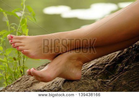 Beautiful female feet on a tree trunk