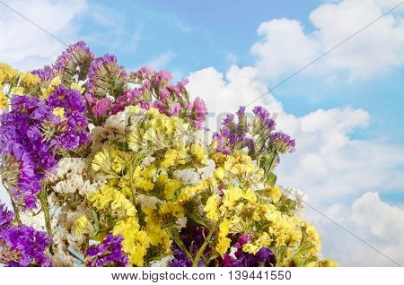 the image on background sky with clouds bunch of colorful wildflowers