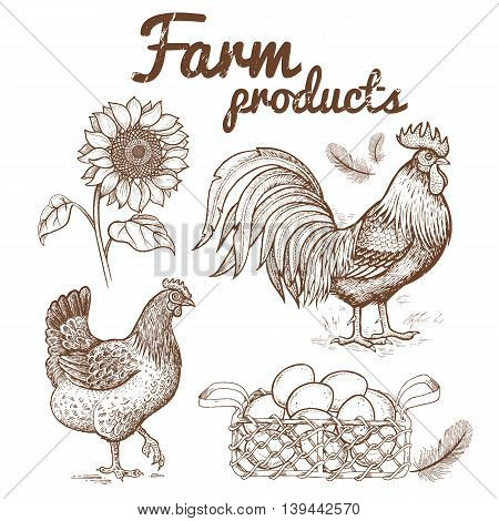 Vector illustration of farm birds - and hen basket with eggs and flower sunflower. Images of animals and objects agricultural theme isolated on white background. Hand drawing vintage.