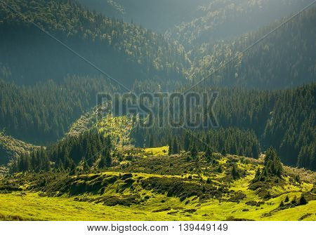 Glade and pine forest in a mountain valley in the sunlight