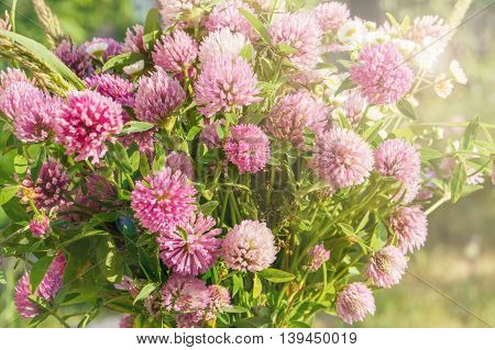 a wild bouquet of pink clover flower on green grass in soft natural sunlight Autumn outdoor vintage photo pastel colours and romantic atmosphere. colorful medical flowers and herbs