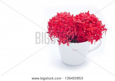 Red Ixora flower heart shape on white flower pot.