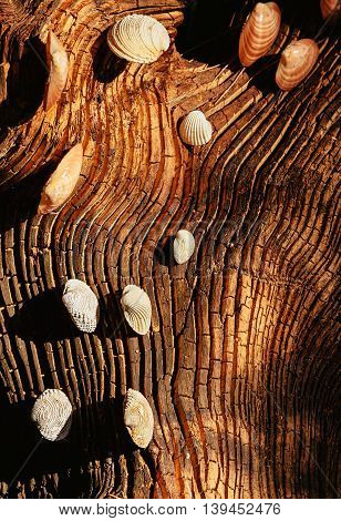 Seashells decoration concept on textured wooden background