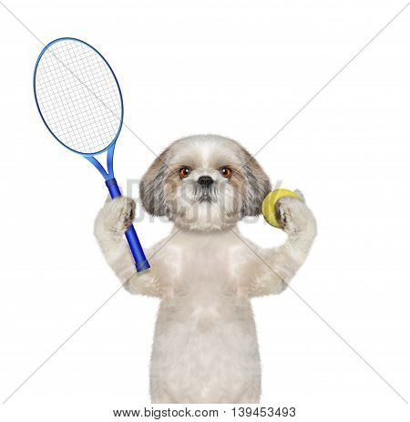 Pretty dog is going to play tennis -- isolated on white