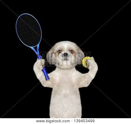 Pretty dog is going to play tennis -- isolated on black