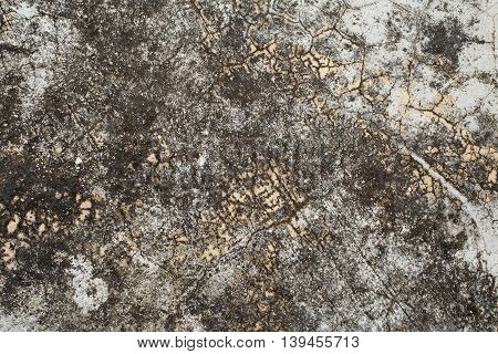 background textured surface cement have black moss nature from rain water