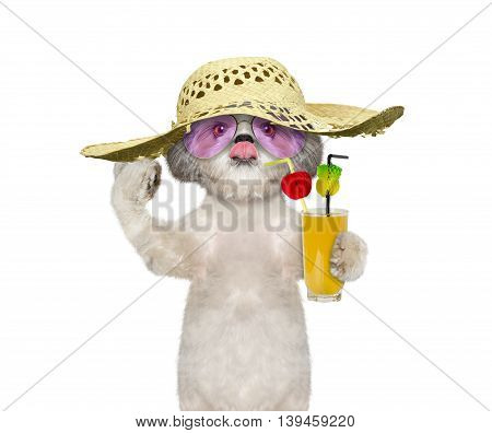 dog has a summer holiday with a glass of cocktail -- isolated on white