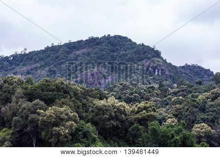 mouantain in doi inthanon national park , chiangmai