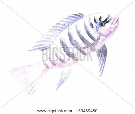 Malawi Zebra Cichlid. Exotic decorative fish on a white background. Watercolor painting