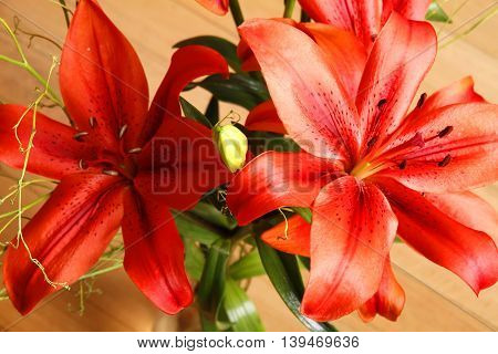 A Bouquet of blooming Lilium Flowers. Digital photo.