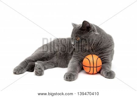 cat with an orange ball on a white background. horizontal photo.