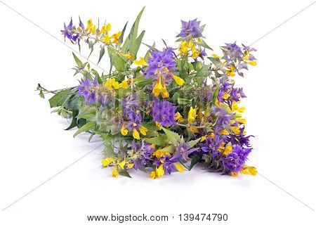 Wild flower Ivan-da-Marya isolated on white background