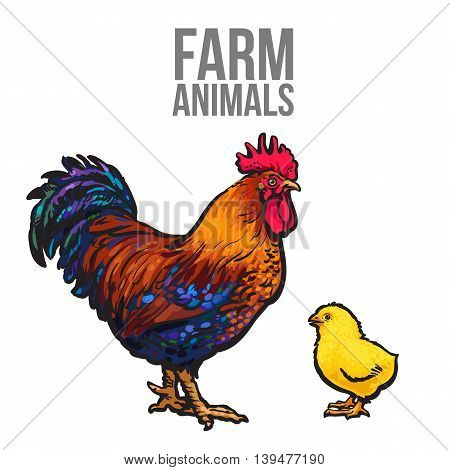 rooster and chicken poultry farm, illustration sketch isolated on white background hand-drawn set farm rooster and birds yellow chick, chicken family dad and baby, farm bird