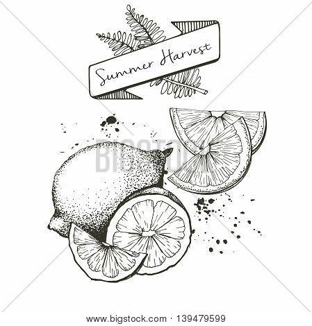 Vector set of summer harvest. Decorated with banner fern leaves and blots. Fresh detox fruit collection. Lemon lime oan orange slices.