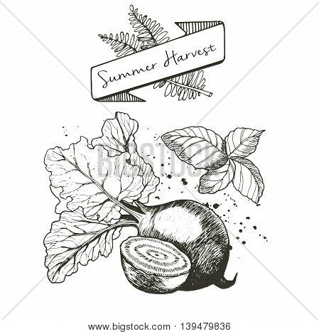Vector set of summer harvest. Decorated with banner fern leaves and blots. Fresh detox fruit collection. Beetroot and basil.