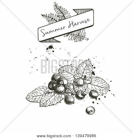Vector set of summer harvest. Decorated with banner fern leaves and blots. Fresh detox fruit collection. Blueberry or cranberry or blackberry and mint leaves.