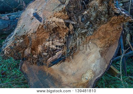 Closeup of a weathered tree trunk outdoor