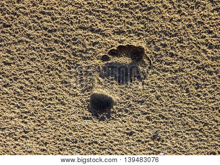 trace of human bare foot on the sand