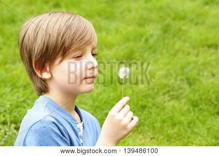 cute blond boy sitting on green grass and blows away dandelion