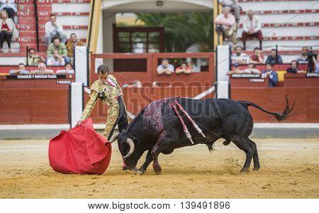 Jaen SPAIN - October 17 2008: The Spanish Bullfighter Cesar Jimenez bullfighting with the crutch in the Bullring of Jaen Spain