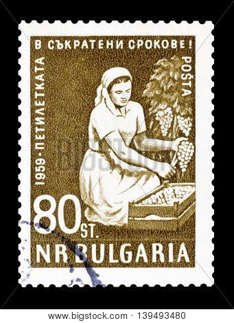 BULGARIA - CIRCA 1959 : Cancelled postage stamp printed by Bulgaria, that shows woman harvesting grapes.