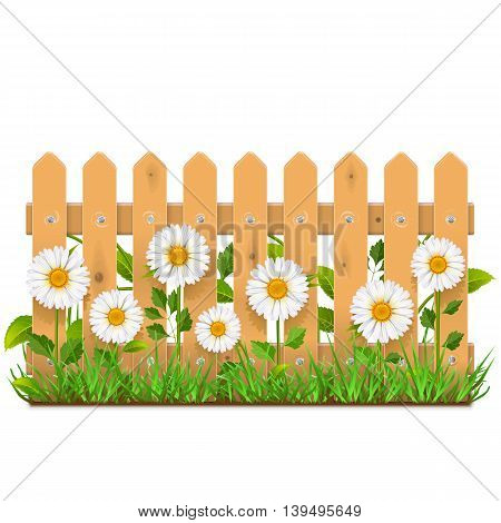 Vector Wooden Fence with Camomiles isolated on white background