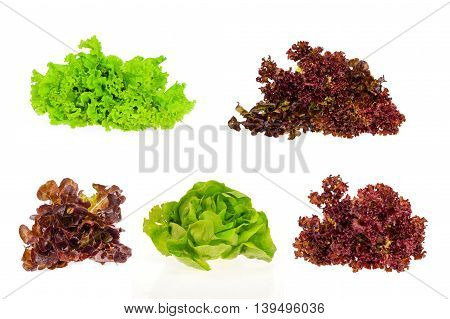 Closeup of fresh hydroponics  lettuce on white background, food concept