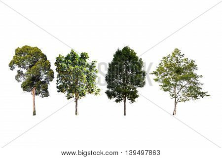 real tree collection isolated on white background for design