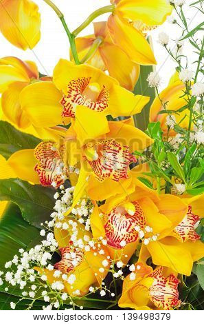 Yellow phalaenopsis orchid studio shot on white