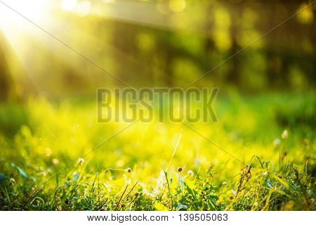Natural background bokeh effect