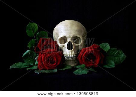 Human Skull With Red Roses Isolated Over Black Bagkground. Gothic Still Life. Book Or Halloween Desi