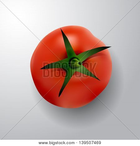 tomato with rootlet top side vector illustration isolated on white background