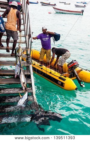 SANTA MARIA CAPE VERDE - DECEMBER 15, 2015: Fishermen returning with a fresh tuna fish catch