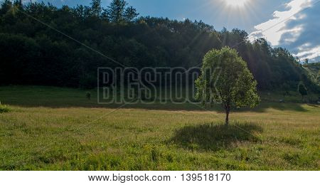 Sun shining above lonely tree on beautiful green field