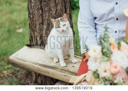 Portrait Of Pregnant Cat Walking On The Bench