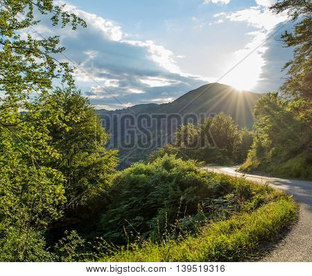 Sun shining on road surrounded by green