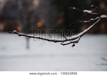white snow on branch of tree background
