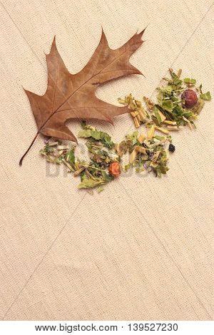 Pile of assorted natural medical dried herb leaves petals and fruits with autumnal oak leaf on burlap surface. Fall concept.