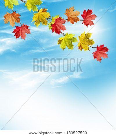 Autumn landscape. Beautiful leaves. Colorful trees. foliage