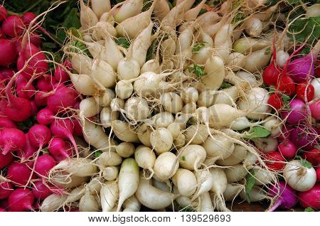 Wild  bunched white and red radishes  roots on