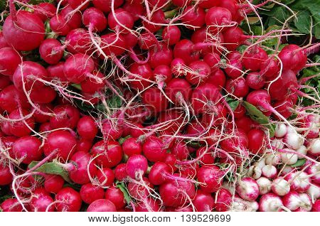 Fresh red and white radish bunches with roots