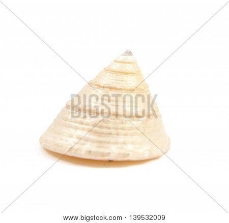 Green Seashell