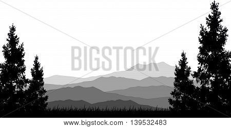 beauty pine tree silhouette with mountain background