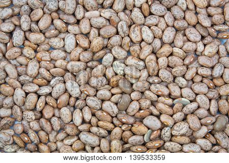 Beautiful group pinto beans texture background .