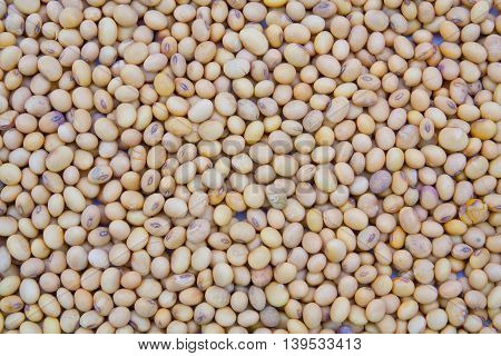 Beautiful group dried soybean texture background .