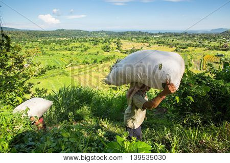 BALI, INDONESIA - MAR 4, 2016: Unknown farmers bear bags from field with grass. Indonesia's economy refers to agrarian-industrial type. Level of national competitiveness was ranked 44th in the world.